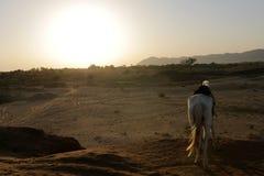 Les chevaux sont des animaux familiers Image stock