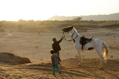 Les chevaux sont des animaux familiers Photographie stock