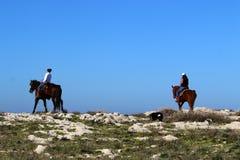 Les chevaux sont des animaux familiers Photo stock