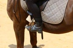 Les chevaux sont des animaux familiers Photographie stock libre de droits
