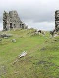 Les chevaux sur amarre de Dartmoor Photographie stock