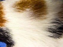Les cheveux d'un chat Images stock