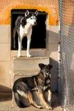 Les chiens abritent abandonné Images stock