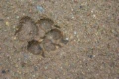 Les chiens choisissent l'empreinte de pas de patte Photos libres de droits