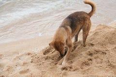 Les chiens creusent Photographie stock libre de droits