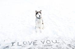 Les chiens de traîneau sibériens fait une déclaration de l'amour Photo libre de droits