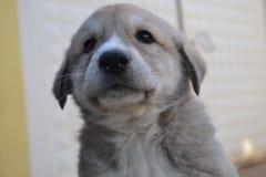 Les chiens et les gens sont tous deux très mignons et fidèles Photos libres de droits