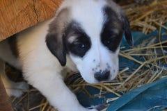 Les chiens et les gens sont tous deux très mignons et fidèles Photo stock