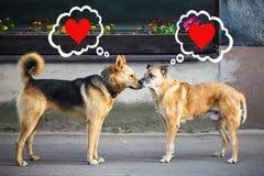 Les chiens face à face et pensent à l'amour Photographie stock