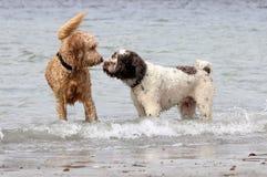 Les chiens font des amis Photographie stock libre de droits