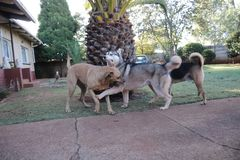 Les chiens mignons appr?cient des heures de r?cr?ation photos libres de droits