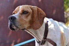 Les chiens mignons sont les animaux amicaux et utiles aux gens Photo libre de droits