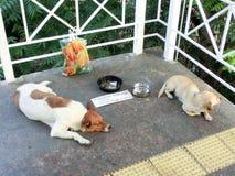 Les chiens prient pour l'aumône images stock