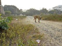 Les chiens r le long dans la route photo libre de droits