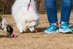 Les chiens reniflent des festins de chienchien à la chasse canine à oeuf de pâques image libre de droits
