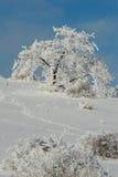 les chrismas ont couvert l'hiver d'arbre de neige Images libres de droits