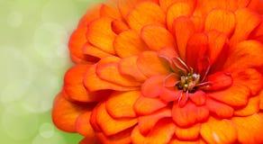 Les chrysanthemums bokeh jaunissent, oranges et verts Images stock
