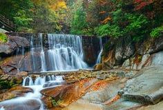 Les chutes de forêt d'automne photos libres de droits