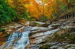 Les chutes de forêt d'automne Image stock