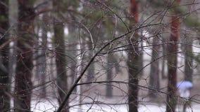 Les chutes de neige dans la distance la silhouette d'une femme sous un parapluie banque de vidéos