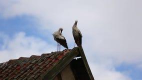 Les cigognes sur le toit banque de vidéos