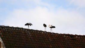 Les cigognes sur le toit