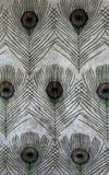 Les clavettes de paon photo stock