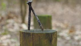 Les clous ont martelé dans un poteau en bois images stock