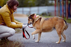 Les coûts non de race de chien de rouge Photos libres de droits