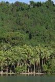 Les cocotiers sur la jungle échouent au Vanuatu images libres de droits