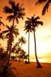 Les cocotiers sur le sable échouent dans le tropique sur le coucher du soleil Image libre de droits