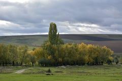 Les collines et les prés d'automne Photographie stock libre de droits