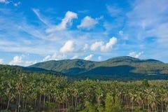 Les collines vertes et les arbres de noix de coco sauvages avec le soleil Image libre de droits