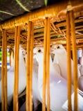 Les colombes blanches dans le panier images stock