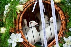les colombes de mariage volent et apportent la paix Image libre de droits