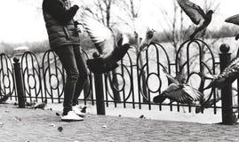 Les colombes volent du trottoir jusqu'au dessus Image libre de droits