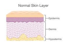 Les composants de la peau humaine posent dans le style de vecteur illustration libre de droits