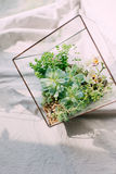 Les compositions des succulents dans l'aquarium Images stock
