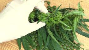 Les comprimés médicinaux de chanvre de cannabis se sont développés par des scientifiques, tendance moderne de la science