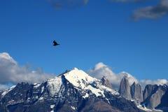 Les condors andins volent dans Parque Nacional Torres del Paine, Chili Photographie stock