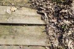 Les conseils et sèchent des feuilles - fond Image libre de droits