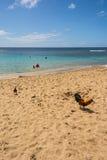 Les coqs sur la plage dans Kauai Images libres de droits
