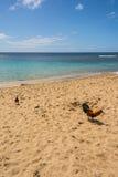 Les coqs sur la plage dans Kauai Photographie stock libre de droits