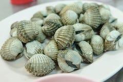 Les coques fraîches servent sur le plat pour le fond de fruits de mer photographie stock libre de droits