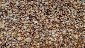 Les coquillages se trouvent sur la côte, texture photo stock