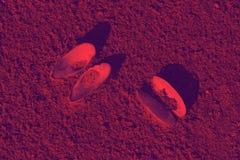 Les coquillages violets rouges ont découvert sur le backgr de texture de coucher du soleil de sable Photo libre de droits