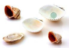 Les coquilles avec la perle et le Rapana ont isolé Photo stock