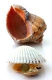 Les coquilles avec la perle et le Rapana ont isolé Photo libre de droits