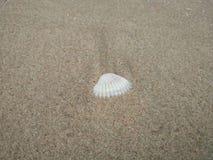 Les coquilles blanches sont sur la plage photo stock