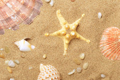 Les coquilles de coque et une étoile de mer se trouvent sur le littoral Photo stock
